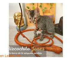 GALLETITA Y BIZCOCHITO - Imagen 8