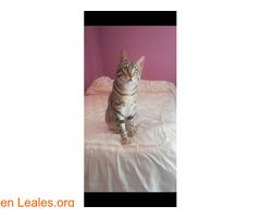 Gato perdido por el río de bellus - Imagen 1