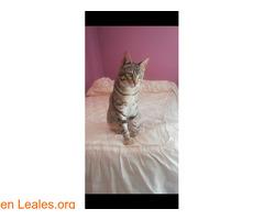 Gato perdido por el río de bellus - Imagen 2
