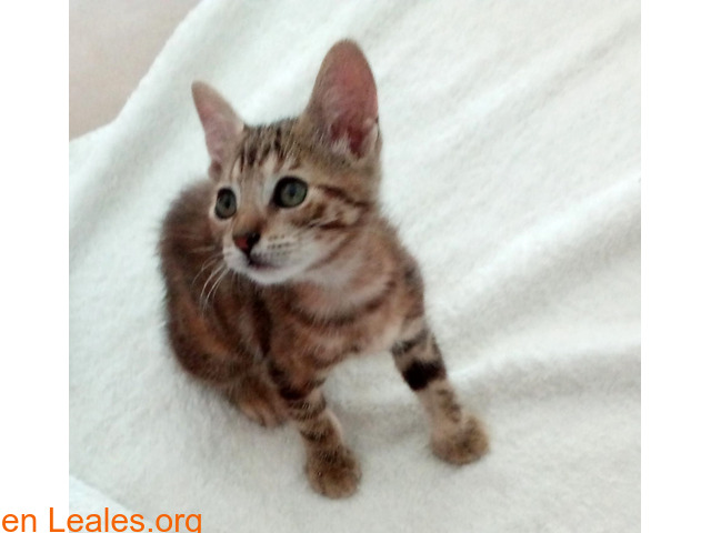 Sammi, dos meses, en adopción - 1