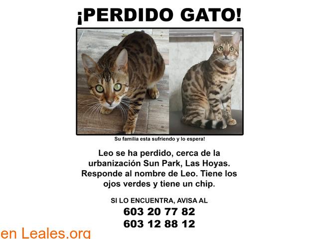 Gato perdido - 1