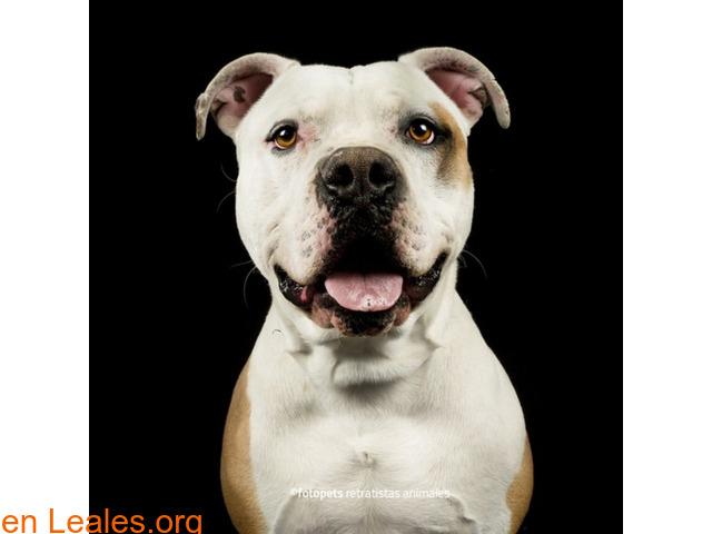 Adopcion perro