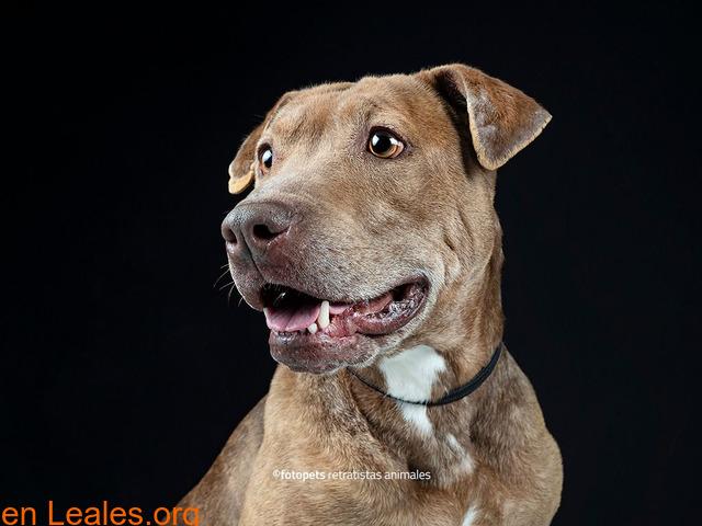Adopcion perro - 1