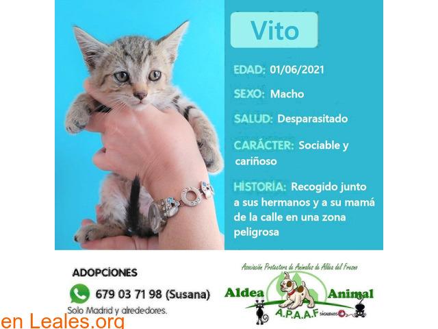 Vito en adopción