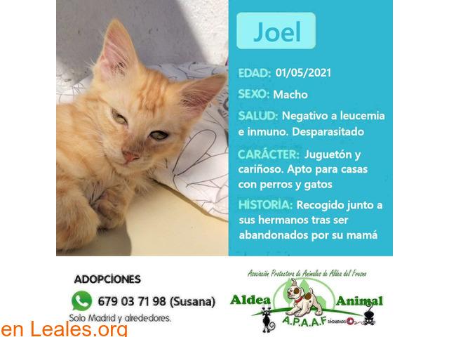 Joel en adopción