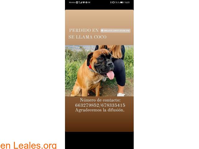 Perro perdido o robado en Torrelles - 1