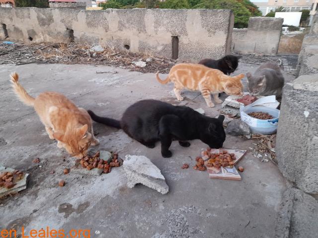 Los gatos negros cuesta dar adopción