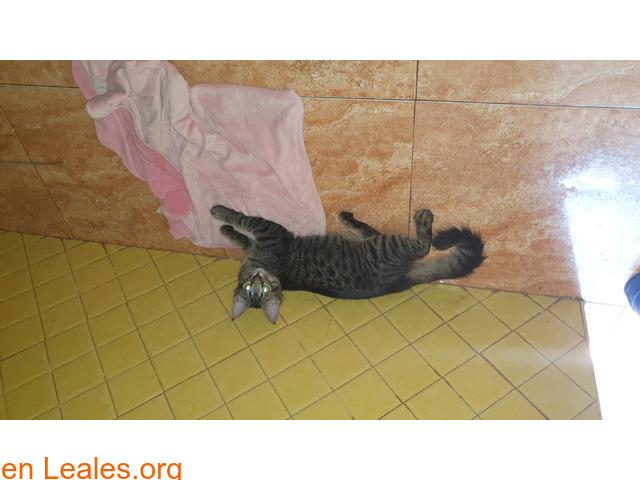 Gatito busca hogar