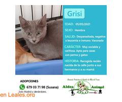 Grisi en adopción - Imagen 1