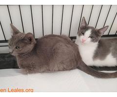 Grisi en adopción - Imagen 3