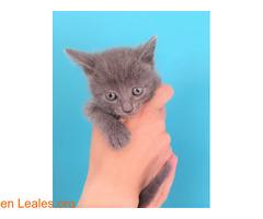 Grisi en adopción - Imagen 6