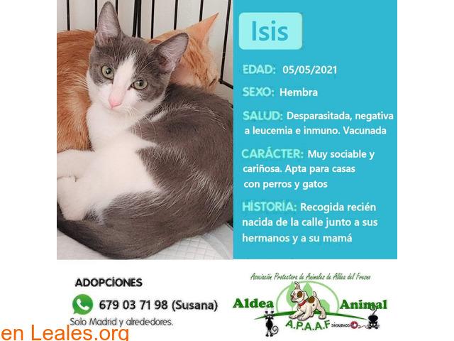 Isis en adopción - 1