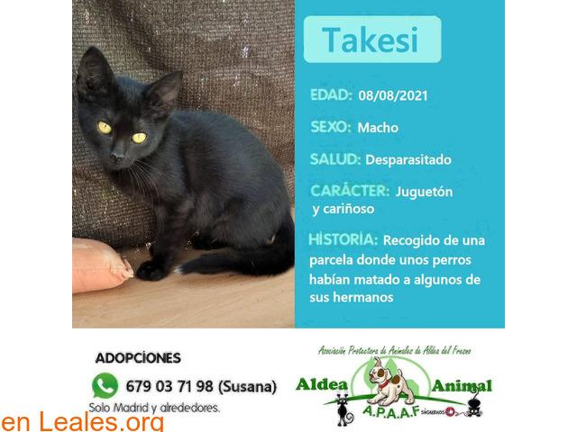 Takesi en adopción