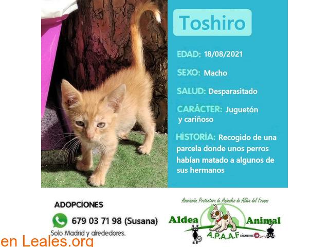 Toshiro en adopción