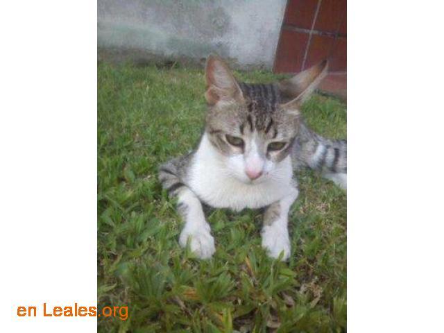 Gato perdido en Argerich - 1