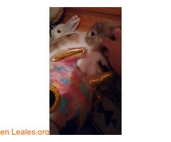 Se dan en adopción dos conejas. - Imagen 3