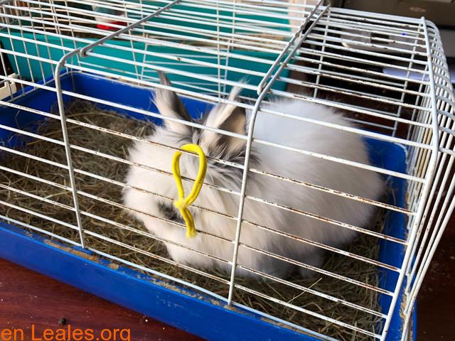 Conejo ya adoptado - 1