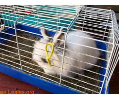 Conejo ya adoptado - Imagen 1