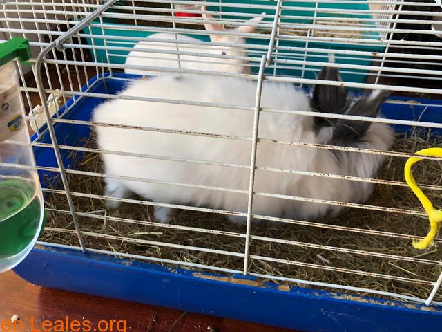 Conejo ya adoptado - 2