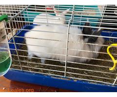 Conejo ya adoptado - Imagen 2