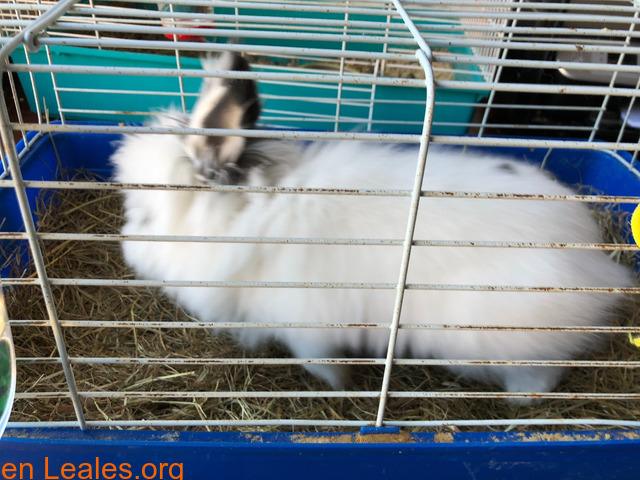 Conejo ya adoptado - 3