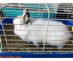 Conejo ya adoptado - Imagen 3