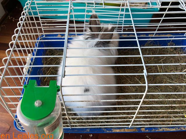 Conejo ya adoptado - 4
