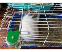 Conejo ya adoptado - Imagen 4