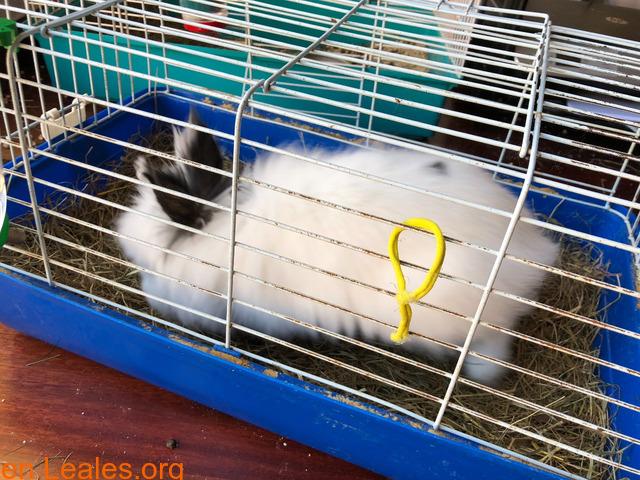 Conejo ya adoptado - 5