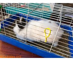Conejo ya adoptado - Imagen 5