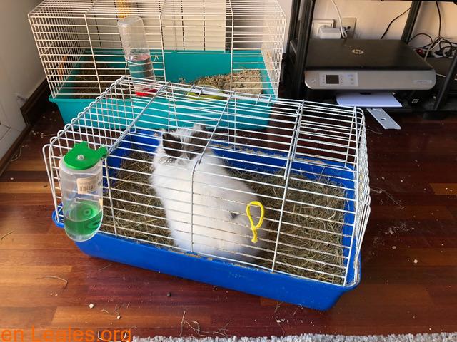 Conejo ya adoptado - 6