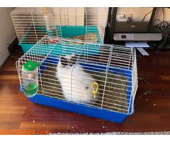 Conejo ya adoptado - Imagen 6
