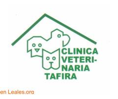 CLINICA VETERINARIA TAFIRA - Imagen 1