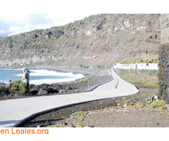 Paya de Los Guirres - La Palma - Imagen 2