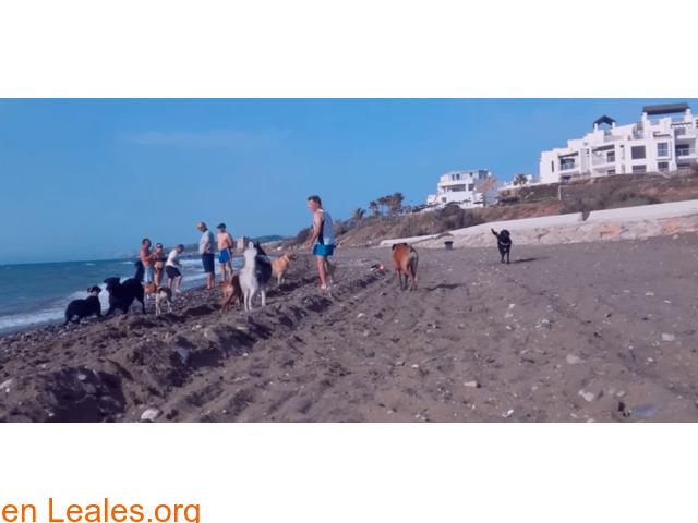 Playa de Piedra Paloma - Málaga - 2