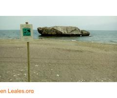 Playa de Piedra Paloma - Málaga - Imagen 3