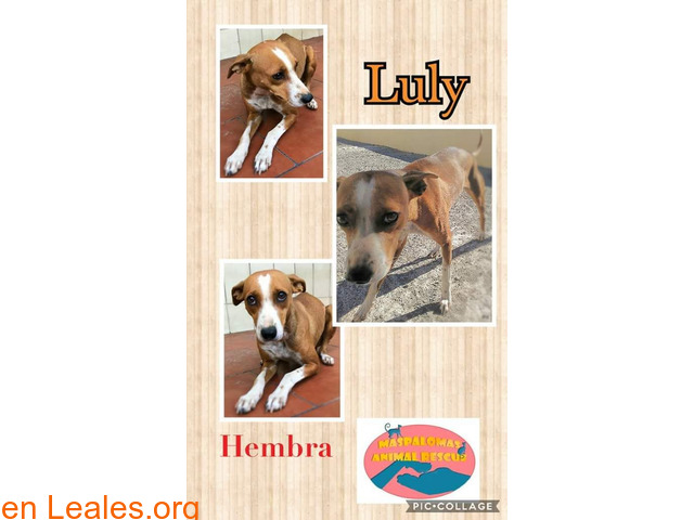 Luly - Maspalomas Animal Rescue - 1