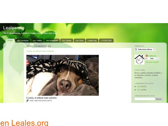 Blogs de Animales Leales - 1