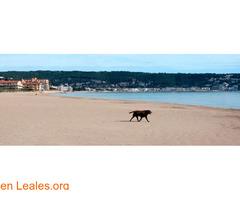 Playa de Els Griells - Girona - Imagen 5