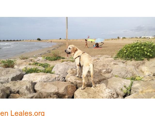 Playa Les Salines - Barcelona - 3