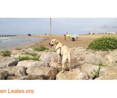Playa Les Salines - Barcelona - Imagen 3