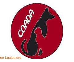 Coada colectivo de abogados animales - Imagen 1