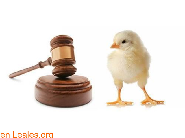 Coada colectivo de abogados animales - 2