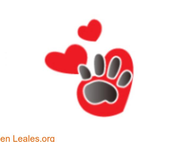 Lidia Voluntaria animalista - 1