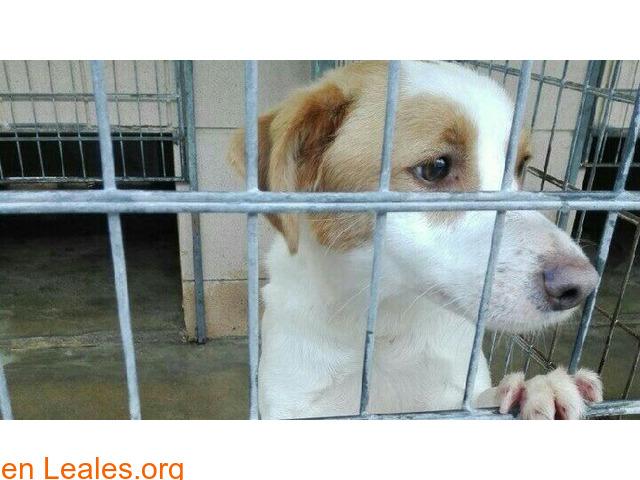 Pautas voluntarios: perreras y albergues - 1
