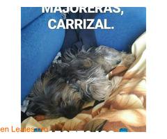 Gran Canaria - Imagen 4