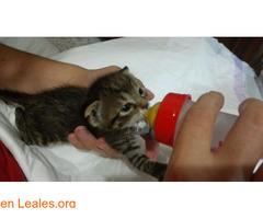 Guía de cuidados para gatitos huérfanos - Imagen 1