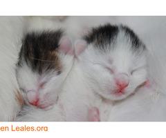 Guía de cuidados para gatitos huérfanos - Imagen 2