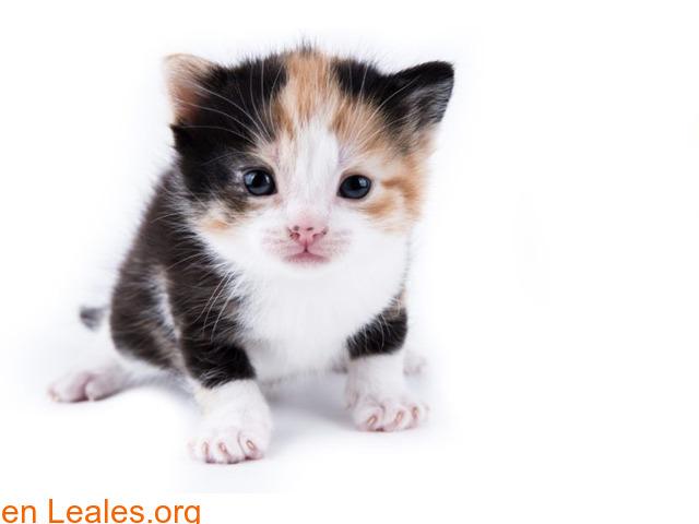 Guía de cuidados para gatitos huérfanos - 3