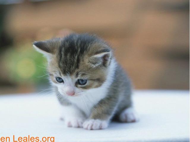 Guía de cuidados para gatitos huérfanos - 4